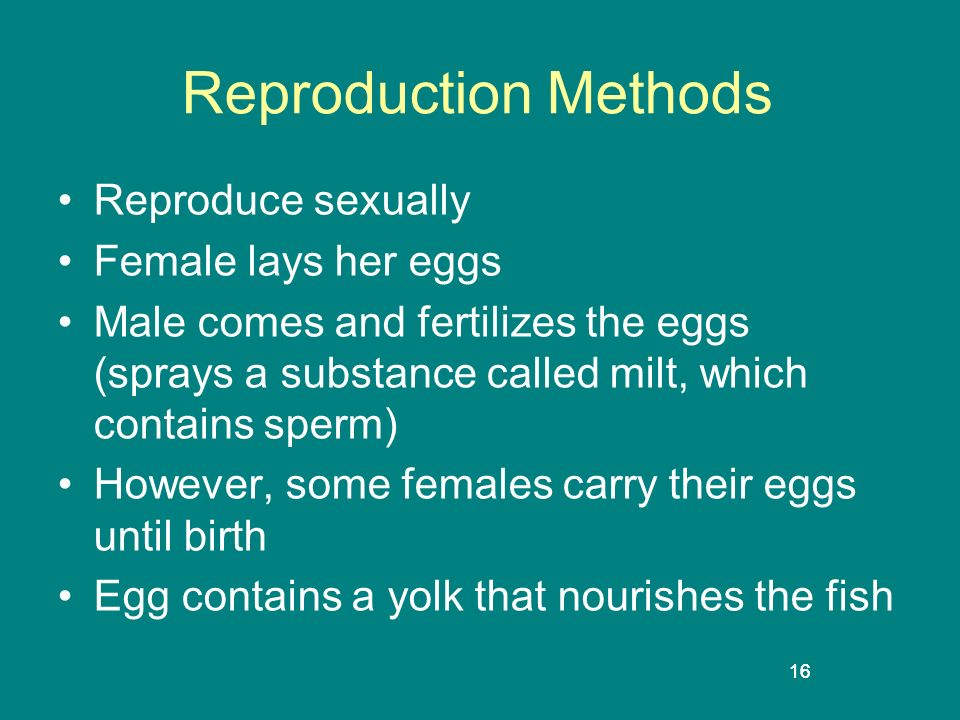 Reproduction Methods Reproduce sexually Female lays her eggs