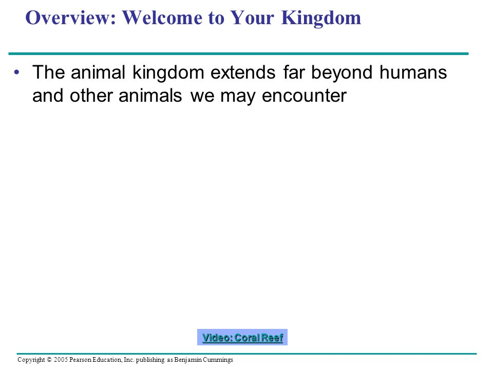 Overview: Welcome to Your Kingdom