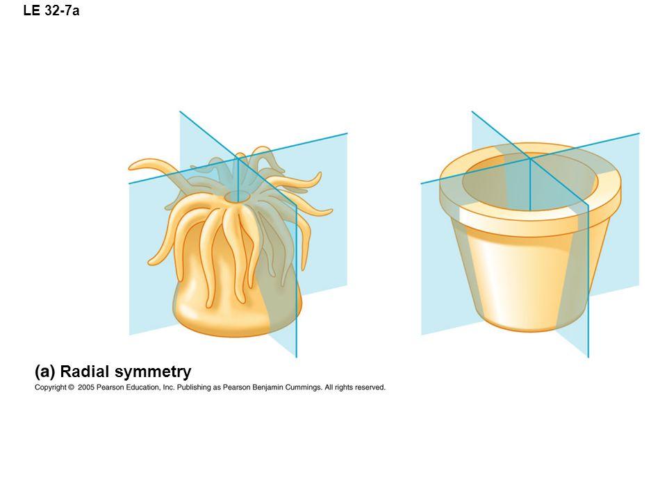LE 32-7a Radial symmetry
