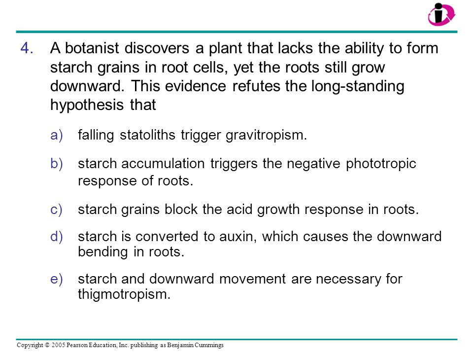 A botanist discovers a plant that lacks the ability to form starch grains in root cells, yet the roots still grow downward. This evidence refutes the long-standing hypothesis that