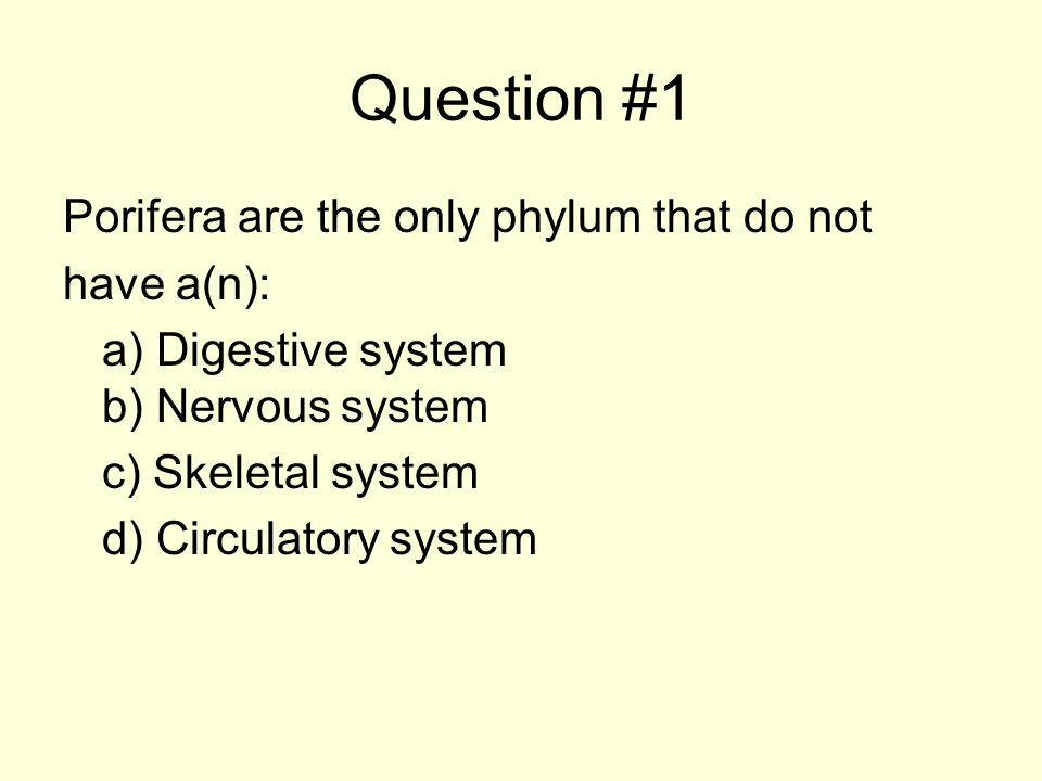Question #1 Porifera are the only phylum that do not have a(n): a) Digestive system b) Nervous system c) Skeletal system d) Circulatory system