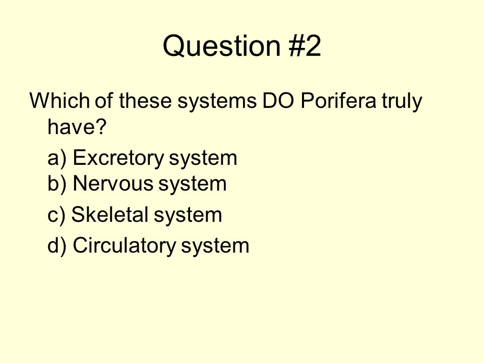 Question #2 Which of these systems DO Porifera truly have.