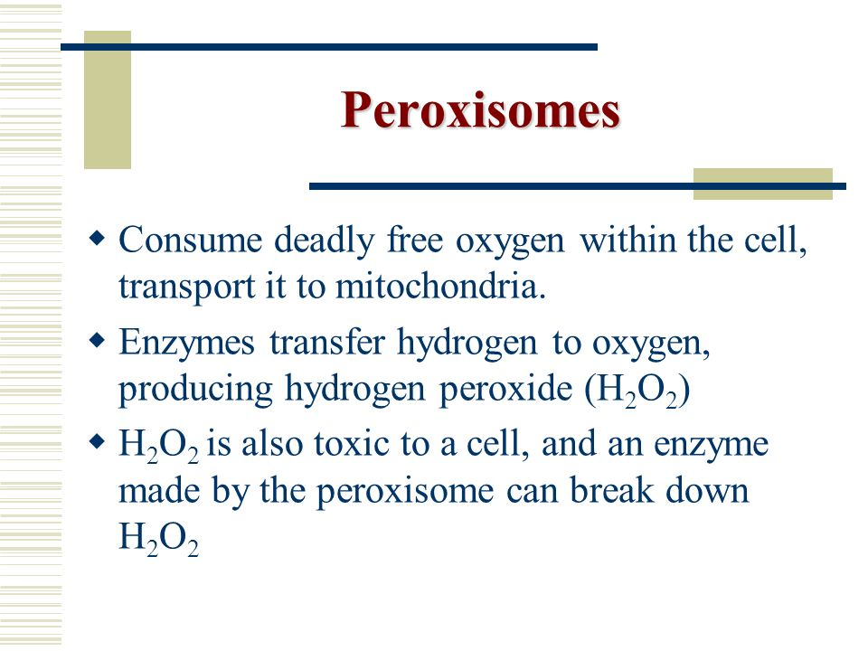 Peroxisomes Consume deadly free oxygen within the cell, transport it to mitochondria.