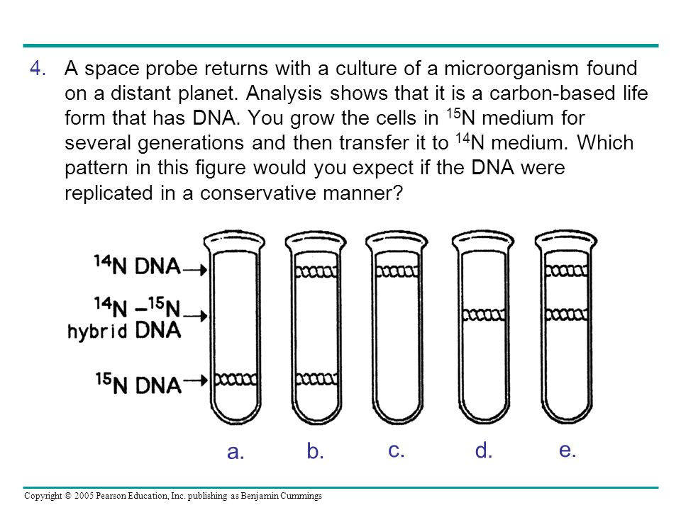 A space probe returns with a culture of a microorganism found on a distant planet. Analysis shows that it is a carbon-based life form that has DNA. You grow the cells in 15N medium for several generations and then transfer it to 14N medium. Which pattern in this figure would you expect if the DNA were replicated in a conservative manner