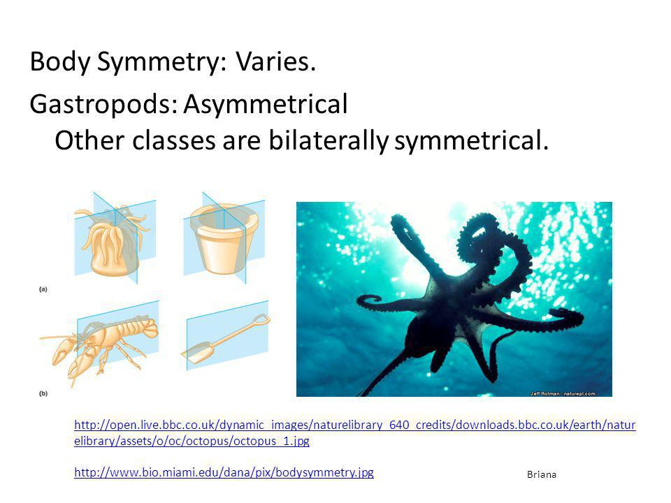 Body Symmetry: Varies. Gastropods: Asymmetrical Other classes are bilaterally symmetrical.