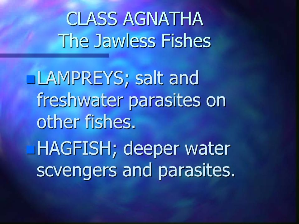 CLASS AGNATHA The Jawless Fishes