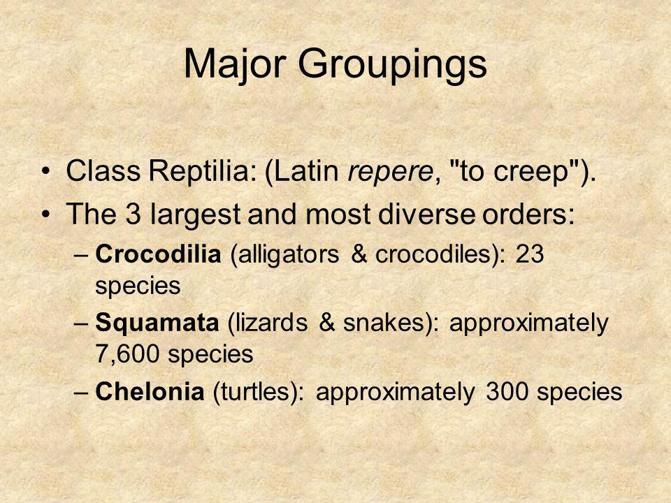 Major Groupings Class Reptilia: (Latin repere, to creep ).