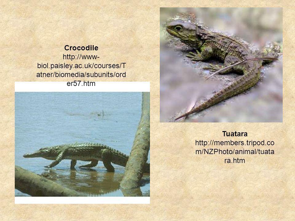 Crocodile http://www-biol.paisley.ac.uk/courses/Tatner/biomedia/subunits/order57.htm.