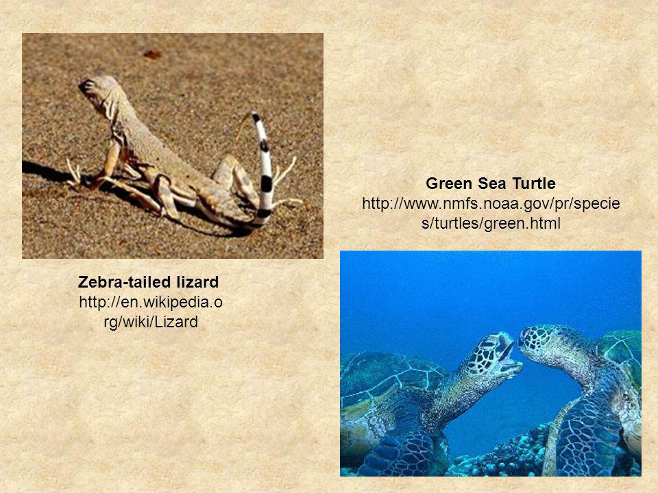 Green Sea Turtle http://www.nmfs.noaa.gov/pr/species/turtles/green.html.