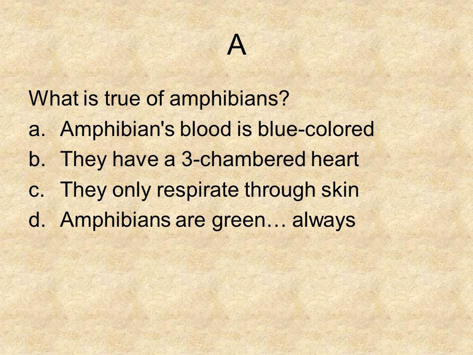 A What is true of amphibians Amphibian s blood is blue-colored