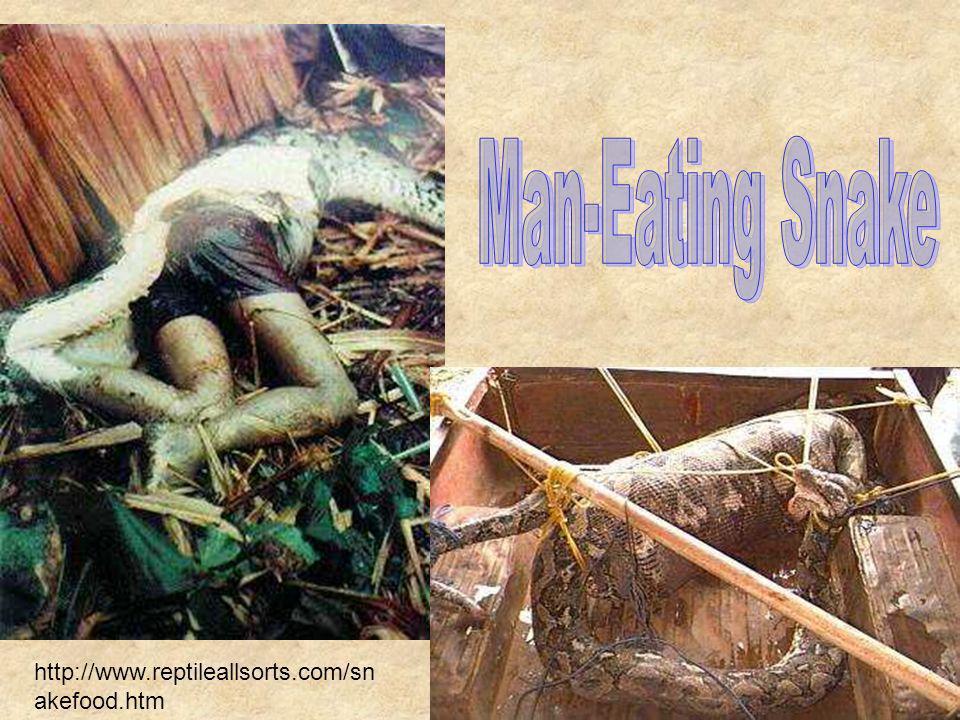 Man-Eating Snake http://www.reptileallsorts.com/snakefood.htm