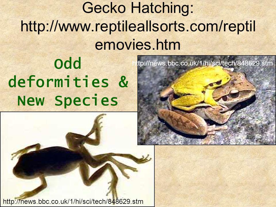 Gecko Hatching: http://www.reptileallsorts.com/reptilemovies.htm