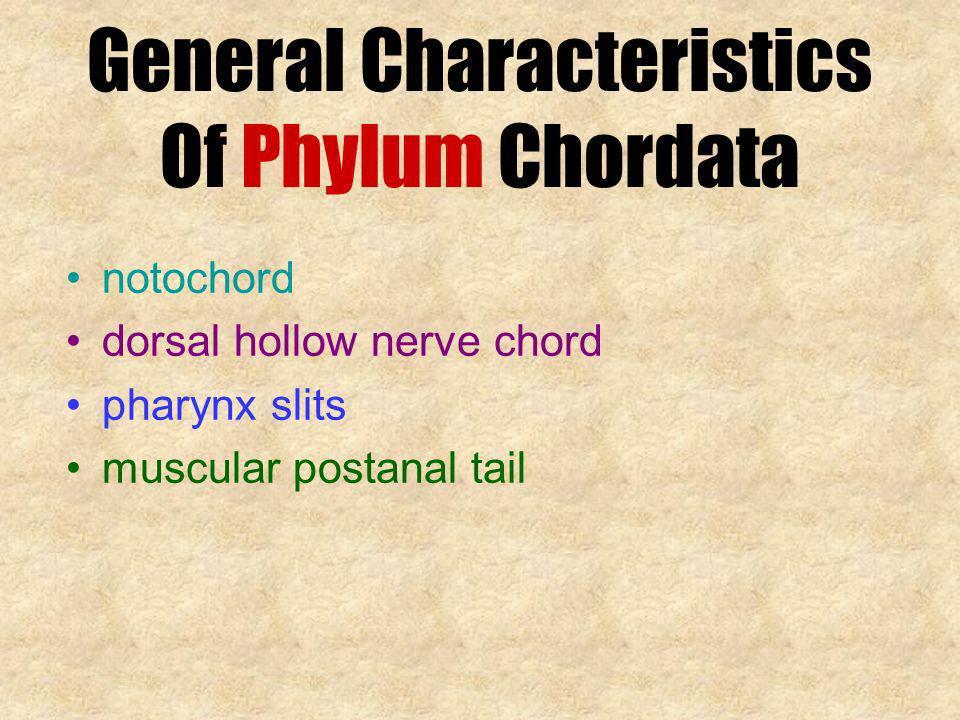 General Characteristics Of Phylum Chordata