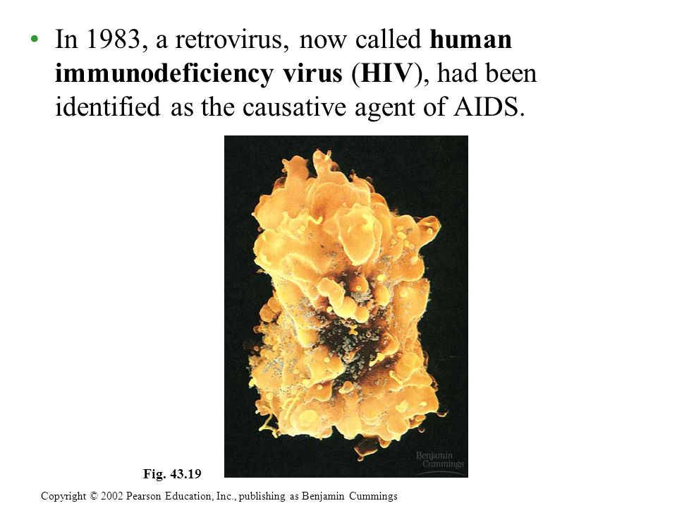 In 1983, a retrovirus, now called human immunodeficiency virus (HIV), had been identified as the causative agent of AIDS.