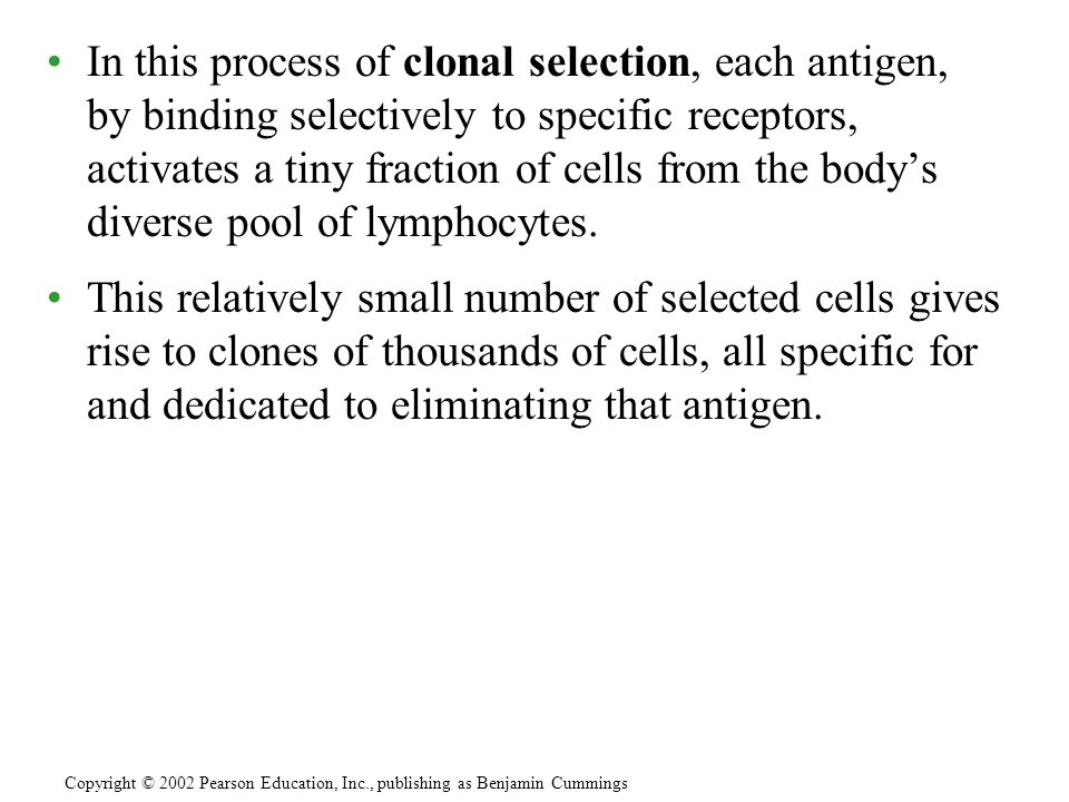 In this process of clonal selection, each antigen, by binding selectively to specific receptors, activates a tiny fraction of cells from the body's diverse pool of lymphocytes.