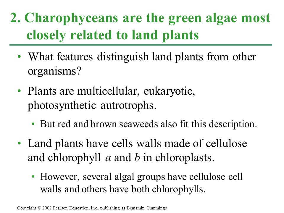 2. Charophyceans are the green algae most closely related to land plants