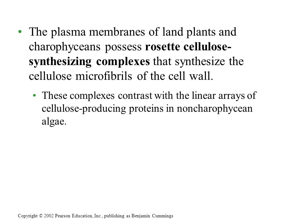 The plasma membranes of land plants and charophyceans possess rosette cellulose- synthesizing complexes that synthesize the cellulose microfibrils of the cell wall.