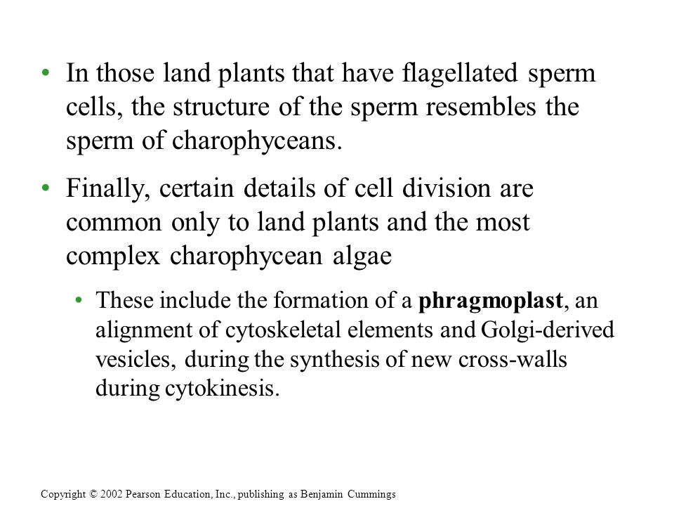 In those land plants that have flagellated sperm cells, the structure of the sperm resembles the sperm of charophyceans.