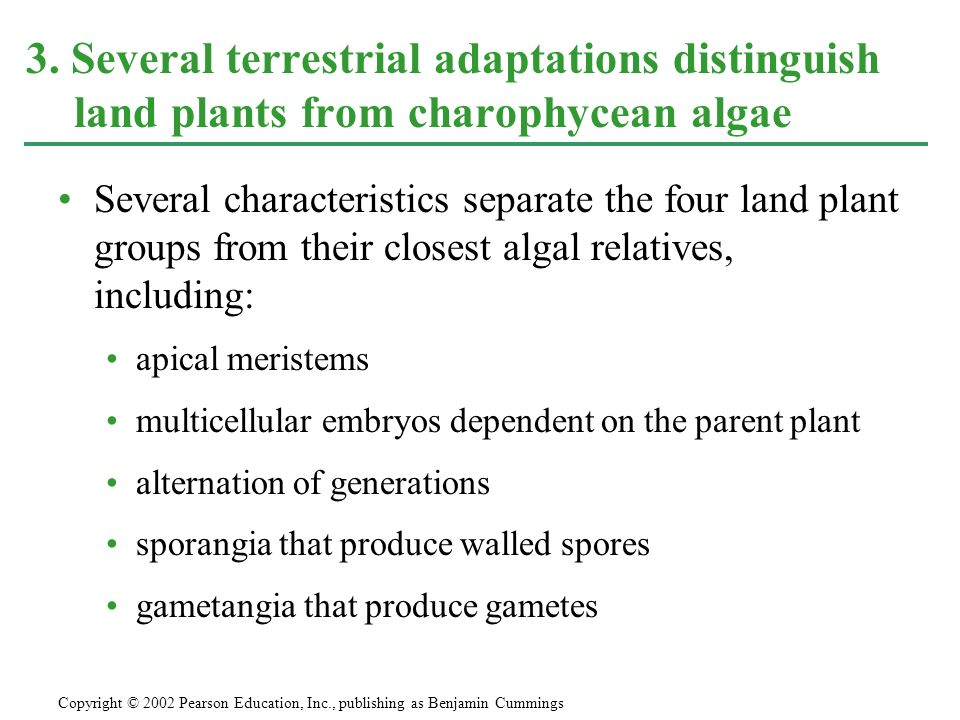 3. Several terrestrial adaptations distinguish land plants from charophycean algae