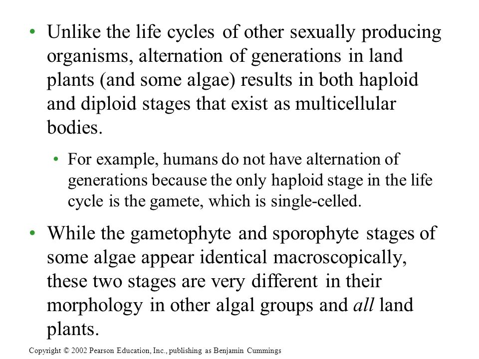 Unlike the life cycles of other sexually producing organisms, alternation of generations in land plants (and some algae) results in both haploid and diploid stages that exist as multicellular bodies.