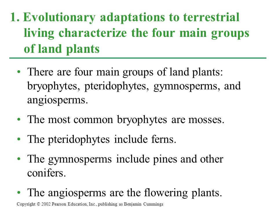 1. Evolutionary adaptations to terrestrial living characterize the four main groups of land plants