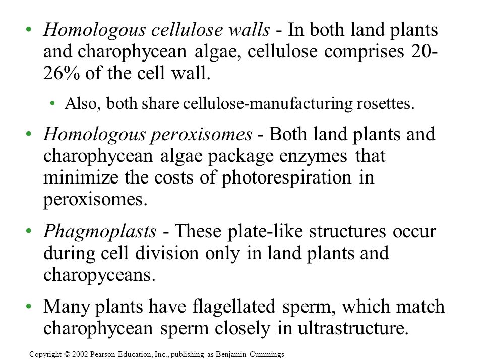 Homologous cellulose walls - In both land plants and charophycean algae, cellulose comprises 20- 26% of the cell wall.