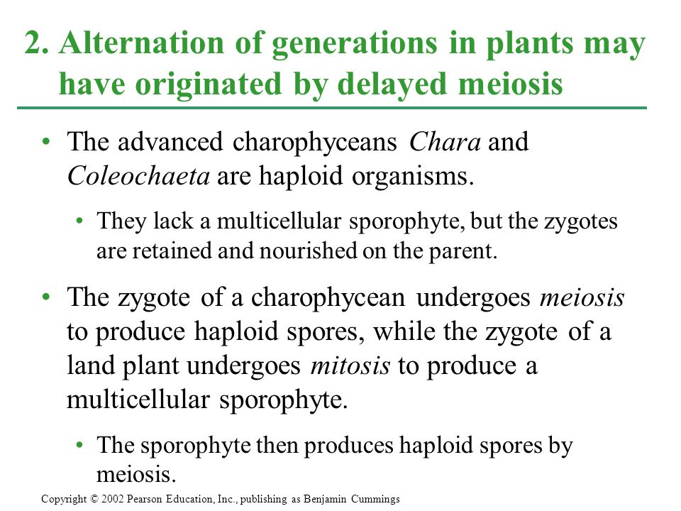 2. Alternation of generations in plants may have originated by delayed meiosis