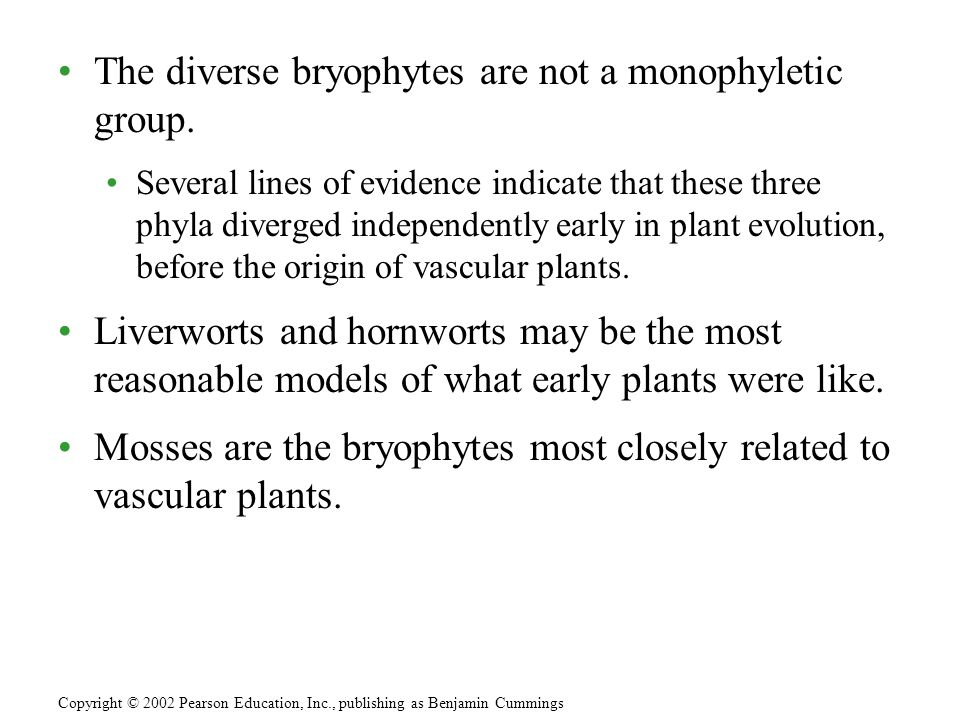 The diverse bryophytes are not a monophyletic group.
