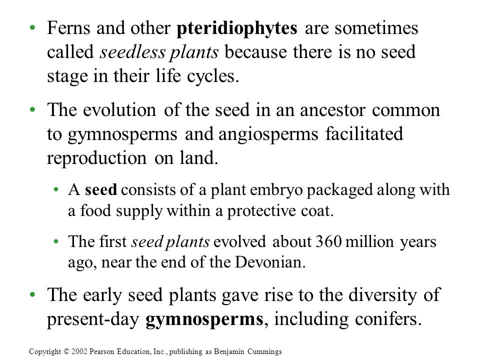 Ferns and other pteridiophytes are sometimes called seedless plants because there is no seed stage in their life cycles.