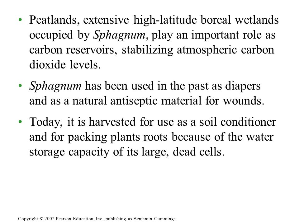 Peatlands, extensive high-latitude boreal wetlands occupied by Sphagnum, play an important role as carbon reservoirs, stabilizing atmospheric carbon dioxide levels.