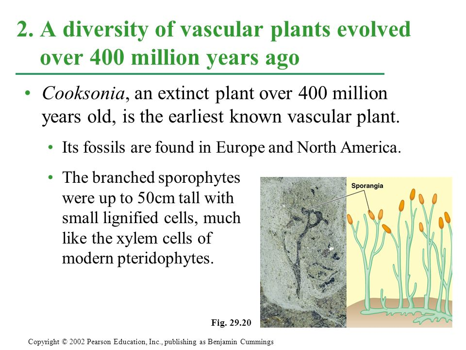 2. A diversity of vascular plants evolved over 400 million years ago