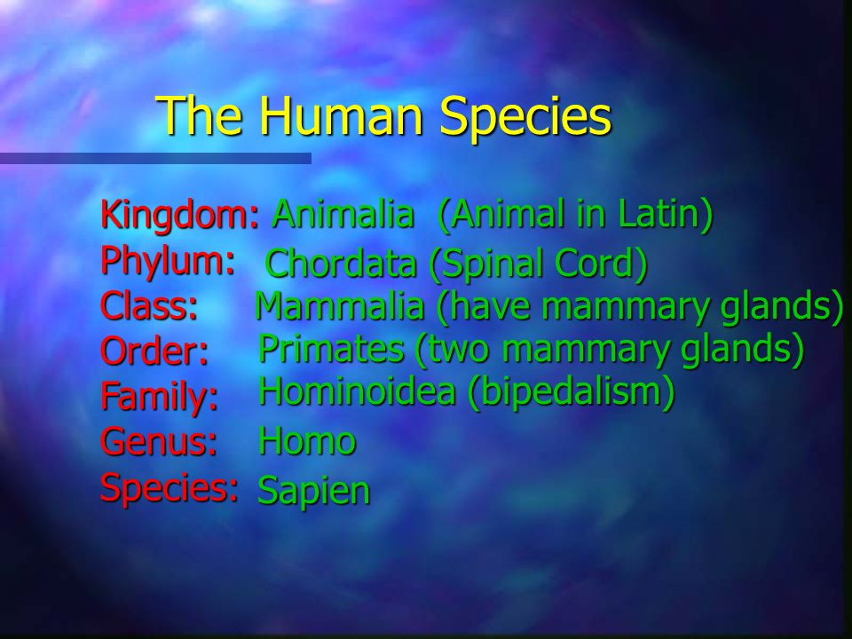 The Human Species Kingdom: Animalia (Animal in Latin) Phylum: Class: