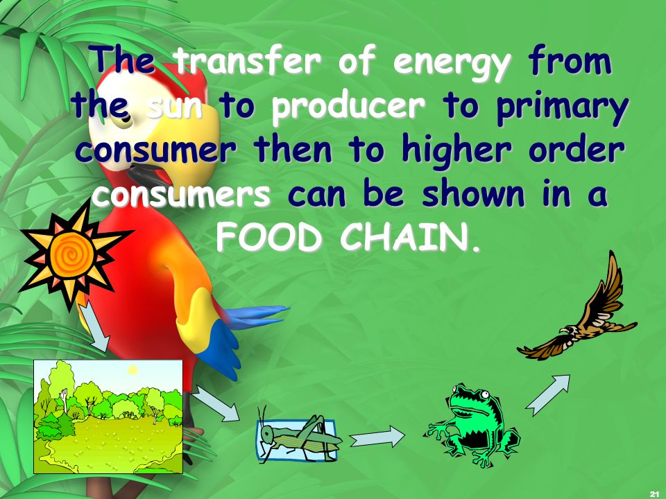 The transfer of energy from the sun to producer to primary consumer then to higher order consumers can be shown in a FOOD CHAIN.