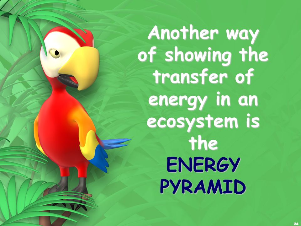 Another way of showing the transfer of energy in an ecosystem is the ENERGY PYRAMID