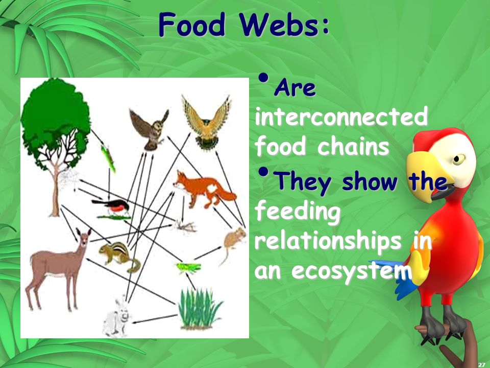Food Webs: Are interconnected food chains