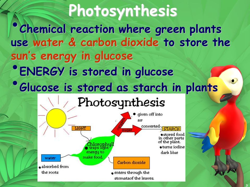 Photosynthesis Chemical reaction where green plants use water & carbon dioxide to store the sun's energy in glucose.