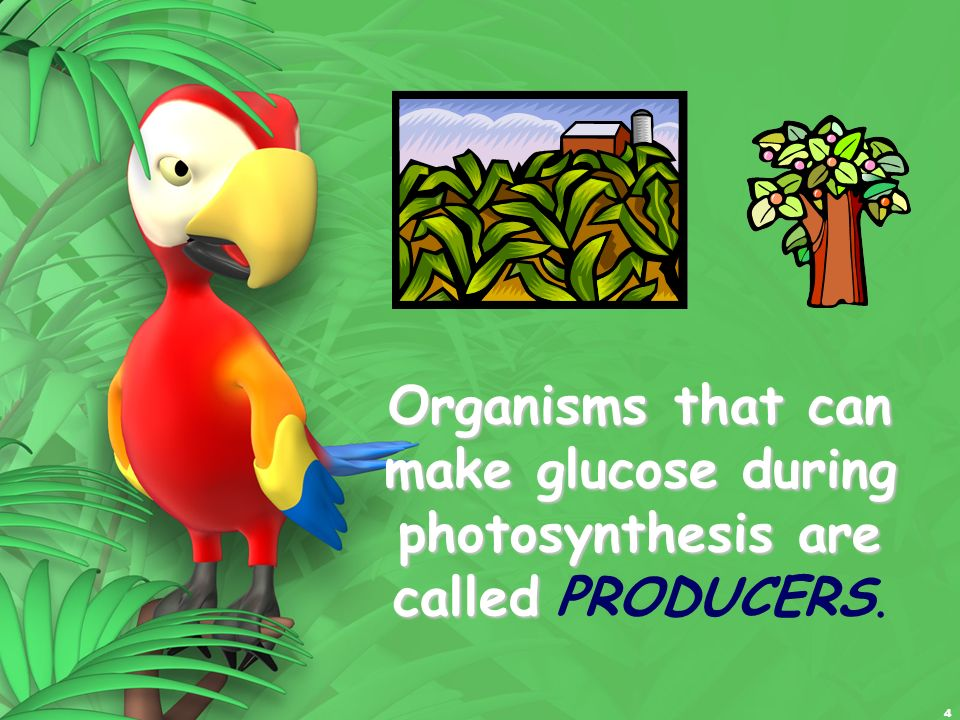 Organisms that can make glucose during photosynthesis are called PRODUCERS.
