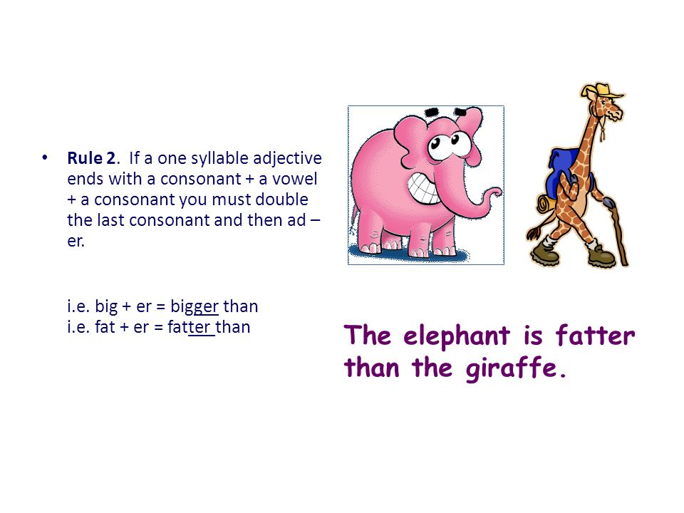 The elephant is fatter than the giraffe.