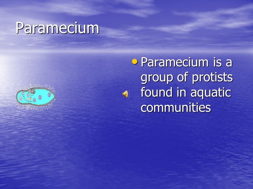 Paramecium Paramecium is a group of protists found in aquatic communities