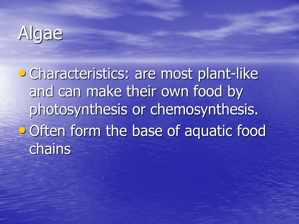 Algae Characteristics: are most plant-like and can make their own food by photosynthesis or chemosynthesis.