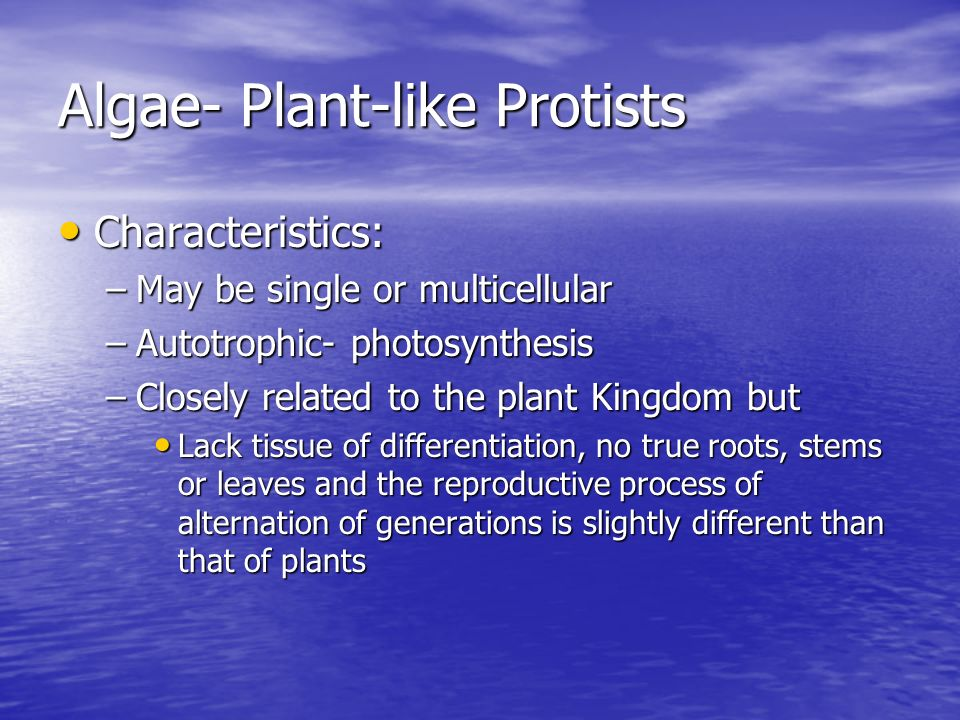 Algae- Plant-like Protists