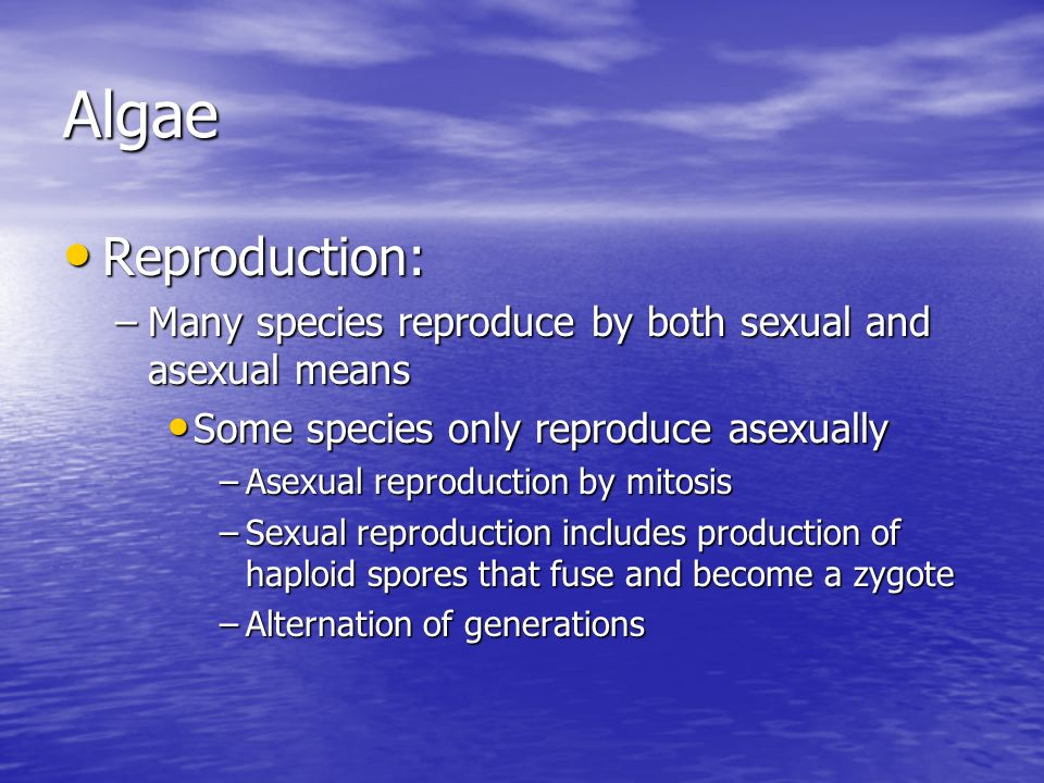 Algae Reproduction: Many species reproduce by both sexual and asexual means. Some species only reproduce asexually.