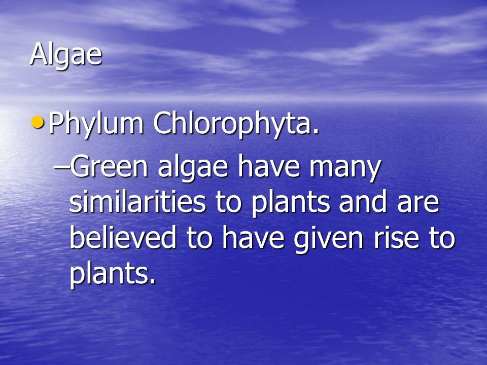 Algae Phylum Chlorophyta.