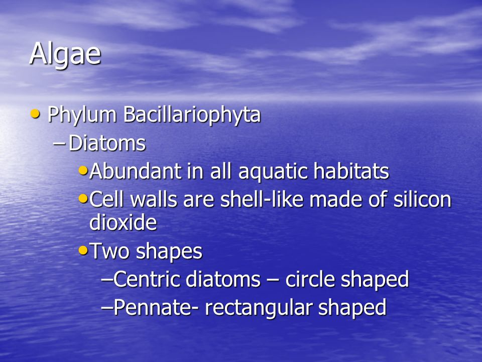 Algae Phylum Bacillariophyta Diatoms Abundant in all aquatic habitats