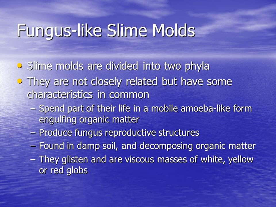 Fungus-like Slime Molds