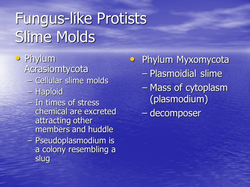 Fungus-like Protists Slime Molds