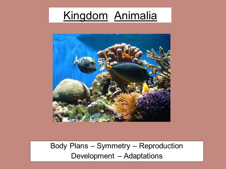 Body Plans – Symmetry – Reproduction Development – Adaptations