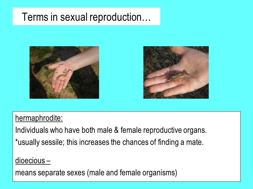 Terms in sexual reproduction…
