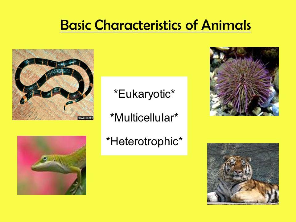 Basic Characteristics of Animals