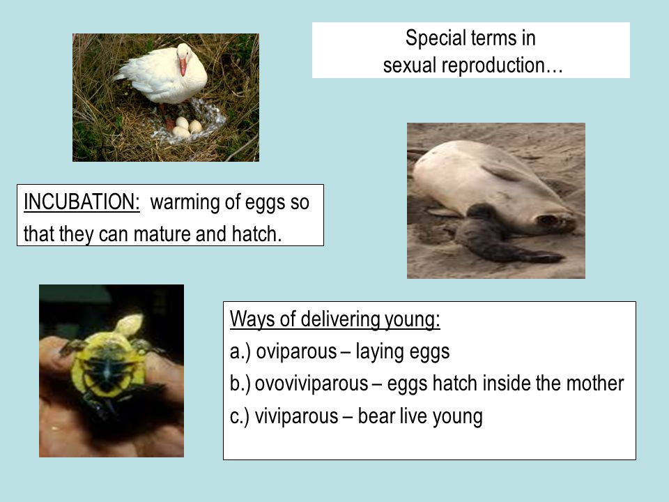 Special terms in sexual reproduction…